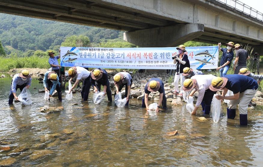 대전시, 지역생태계 상징'감돌고기'2차 복원 (4).jpeg
